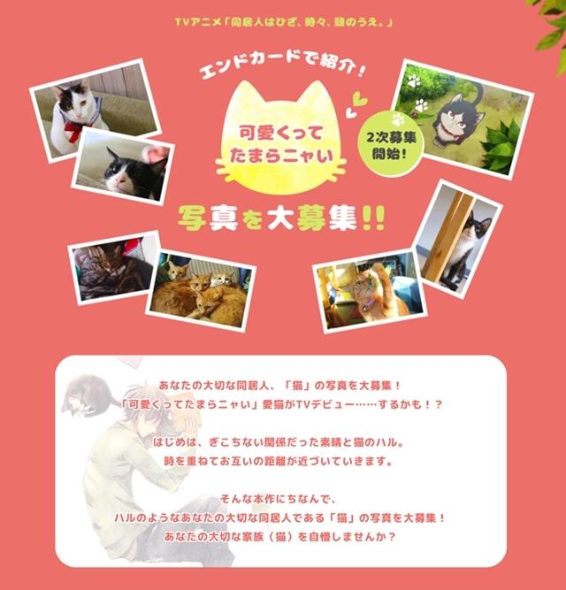 テレビアニメ『同居人はひざ、時々、頭のうえ。』に声優・杉田智和さん、豊口めぐみさんが出演! メインビジュアルも公開に!-3