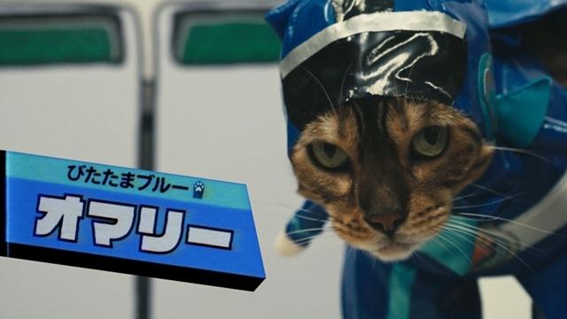 森田成一さん・高橋良輔さん・杉田智和さんら人気声優出演! 新感覚ショートムービー『ネコ戦隊 びたたま』PV公開、本日10月11日より放送スタート-3