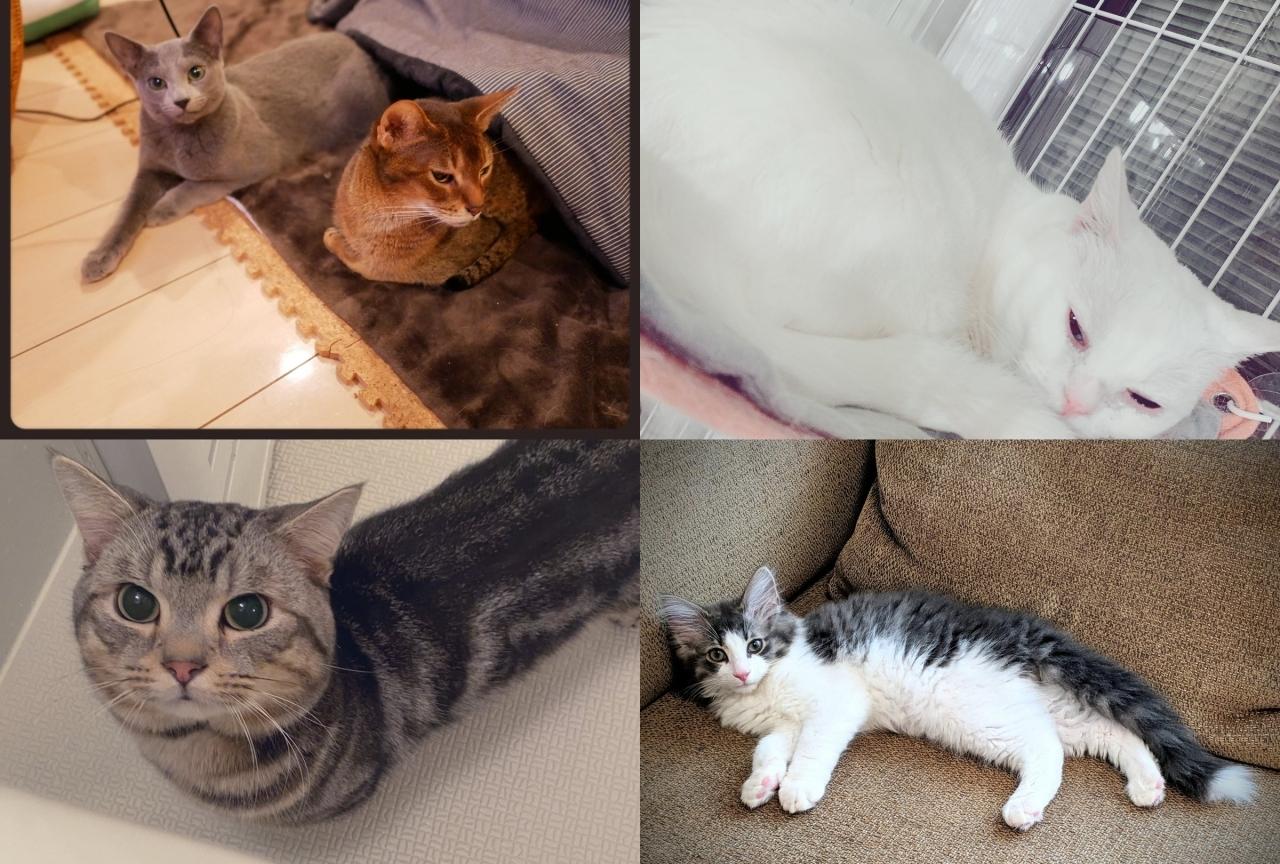 【2月22日は猫の日!】ネコを飼っている声優さんまとめ!