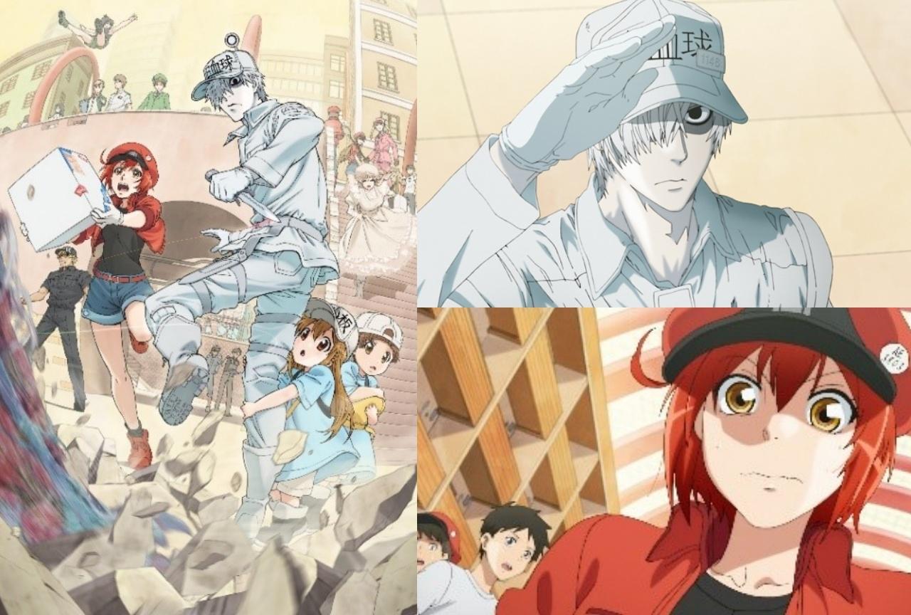 TVアニメ『はたらく細胞』再放送&ABEMA特別番組配信決定!