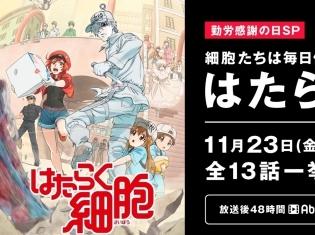 TVアニメ『はたらく細胞』11月23日の「勤労感謝の日」にAbemaTVで全話無料一挙放送!放送終了後48時間はAbema ビデオで無料視聴可能